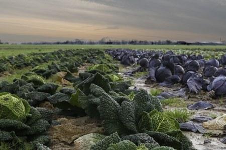 Appel à candidature - Projet d'installation en maraîchage, horticulture, herboristerie...