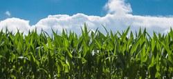 Calamités agricoles - Réunion de la Commission communale