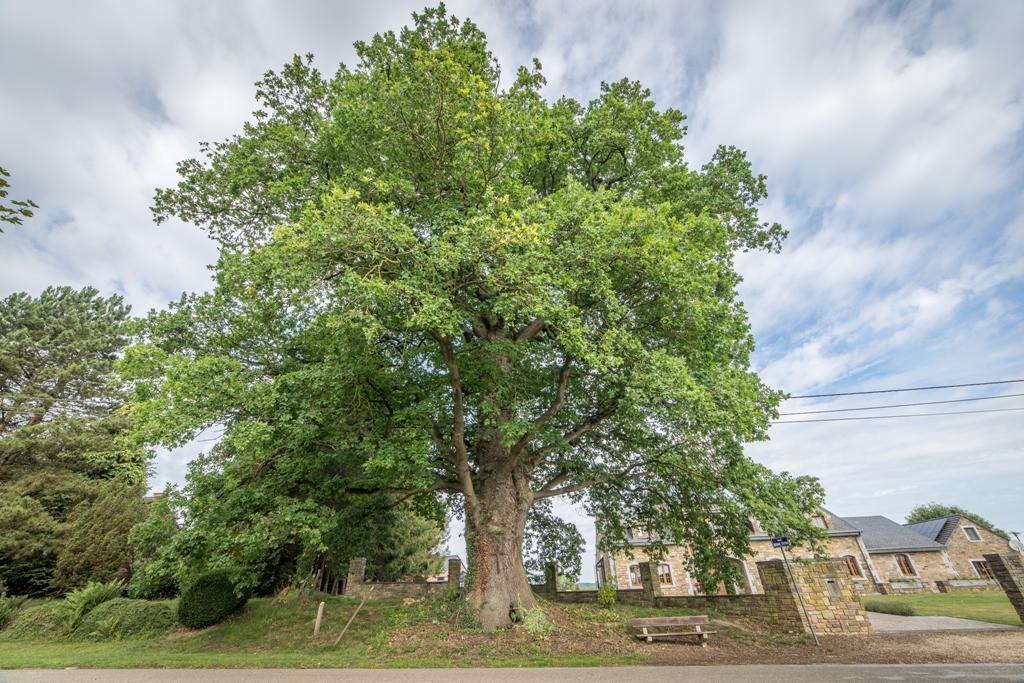 Le Gros Chêne 2