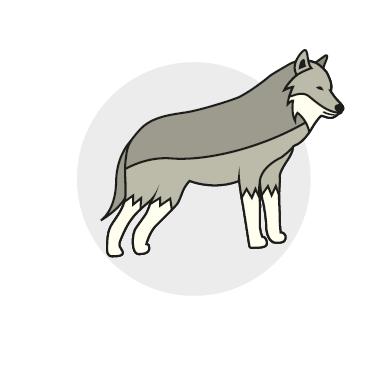 Balade des loups